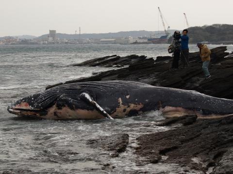 クジラからのメッセージ
